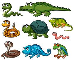 Different kinds of reptiles vector