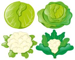 Cabbages and cauliflowers on white