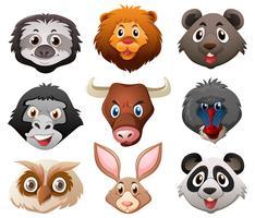 Rostos de animais selvagens