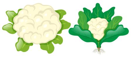 Cauliflower heads with leaves