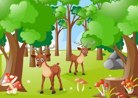Zwei Hirsche im Wald