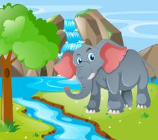 Wild elephant by the waterfall