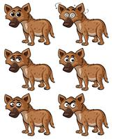 Hyäne mit verschiedenen Gesichtsausdrücken