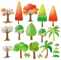 Des arbres à différentes saisons