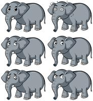 Wild elephant with different facial expression