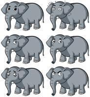 Vild elefant med olika ansiktsuttryck
