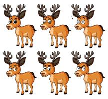 Deer with different facial expressions