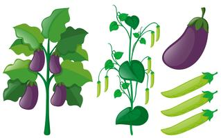 Eggplant and greenpea trees on white background