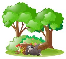 Sloth in the forest