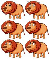 Lion with different expressions