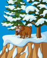 Grizzly bear on snow mountain