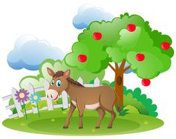 Donkey and apple tree in the farm
