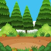 Scena di sfondo con alberi di pino