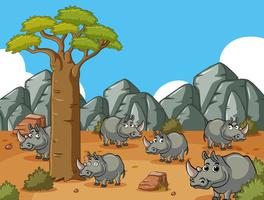 Savanna field with many rhinos