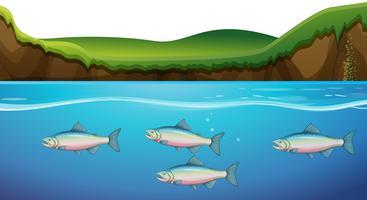 Escena con peces bajo el río