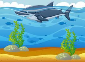 Tiburón salvaje nadando bajo el océano