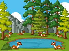 Am Teich lebende Mungos