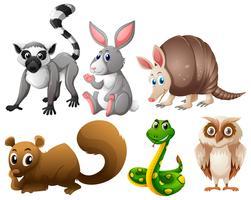 Verschiedene Tierarten