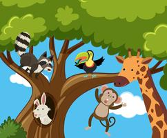 Many animals on the tree