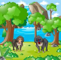 Baboons living in the wilderness