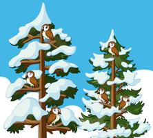 Many owls on the pine trees