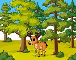 Cervo, vivendo, em, a, floresta
