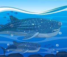 Whale sharks and fish under the ocean