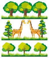 Giraffe im Park