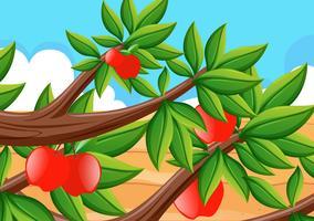 Pommes rouges sur l'arbre