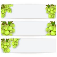 Kort eller etiketter med realistiska vindruvor. Vektor illustration