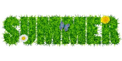Inscription Summer from the grass vector