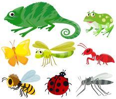 Diferentes tipos de insectos
