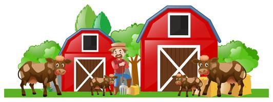Agricoltore e molte mucche nella fattoria