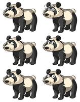 Panda with different facial expressions