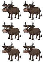 Wild buffalo with different facial expressions