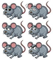 Rat with different facial expressions