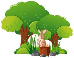 Wild rabbit in the forest
