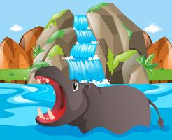 Wild hippo at the waterfall