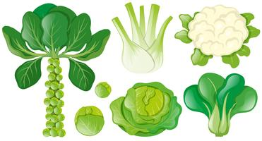 Different types of green vegetables