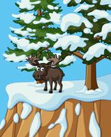 Moose standing on mountain