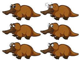 Platypus with different facial expressions