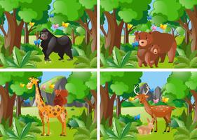Four forest scene with wild animals