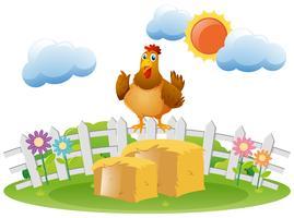 Pollo de pie en el pajar