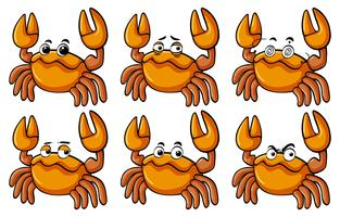Crabs with different facial expressions