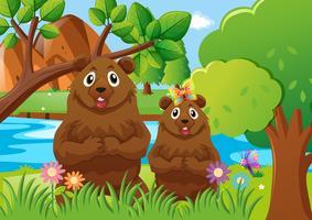 Dois, ursos, em, a, floresta
