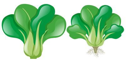 Spinaci verdi su sfondo bianco