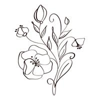 modern flowers drawing and sketch floral with line-art Isolated on white background