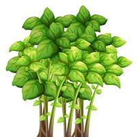 Cacho de folhas verdes