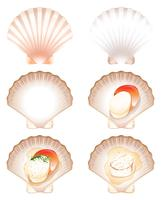 Set of fresh and cook scallop