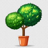 Bonsai tree in clay pot vector